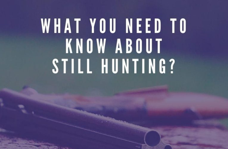 What You Need To Know About Still Hunting?