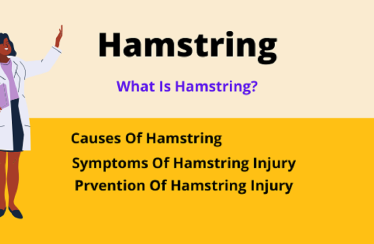 What is Hamstring?