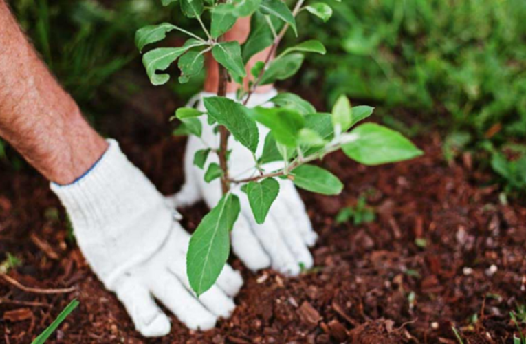 Tips to Restore Good Health of Trees in Your Yard
