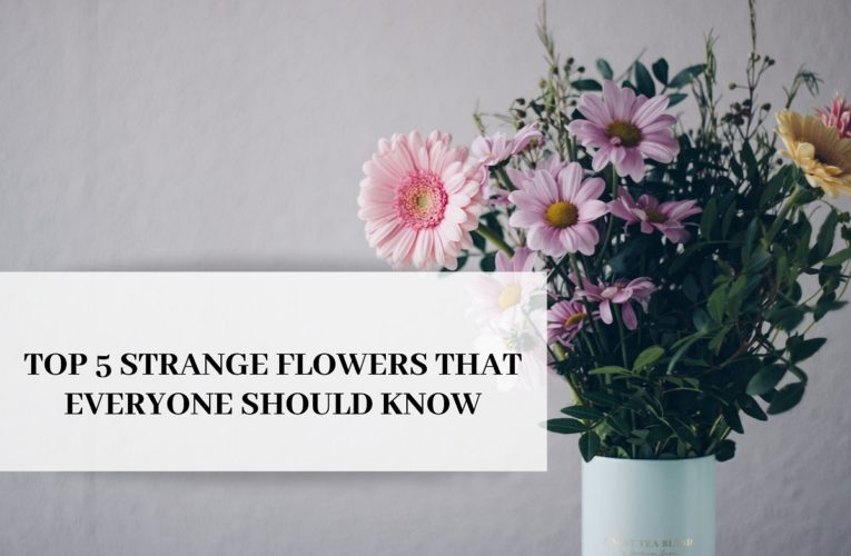 Top 5 Strange Flowers That Everyone Should Know