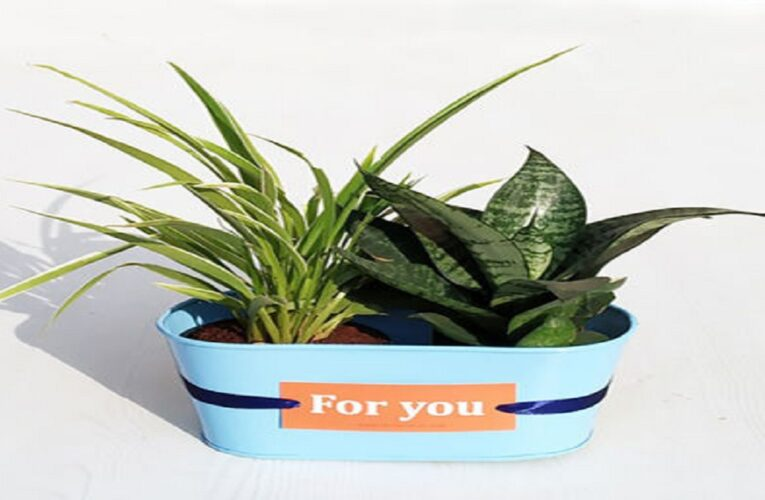 Extraordinary Options To Bring Greenery Into Your Office Environment With  Indoor Plants!!!