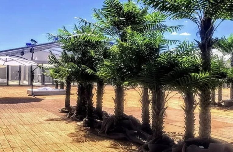 Palm Trees for Hire – An Affordable Option to decorate your surrounding