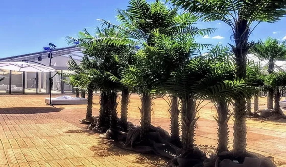 Palm Trees for Hire
